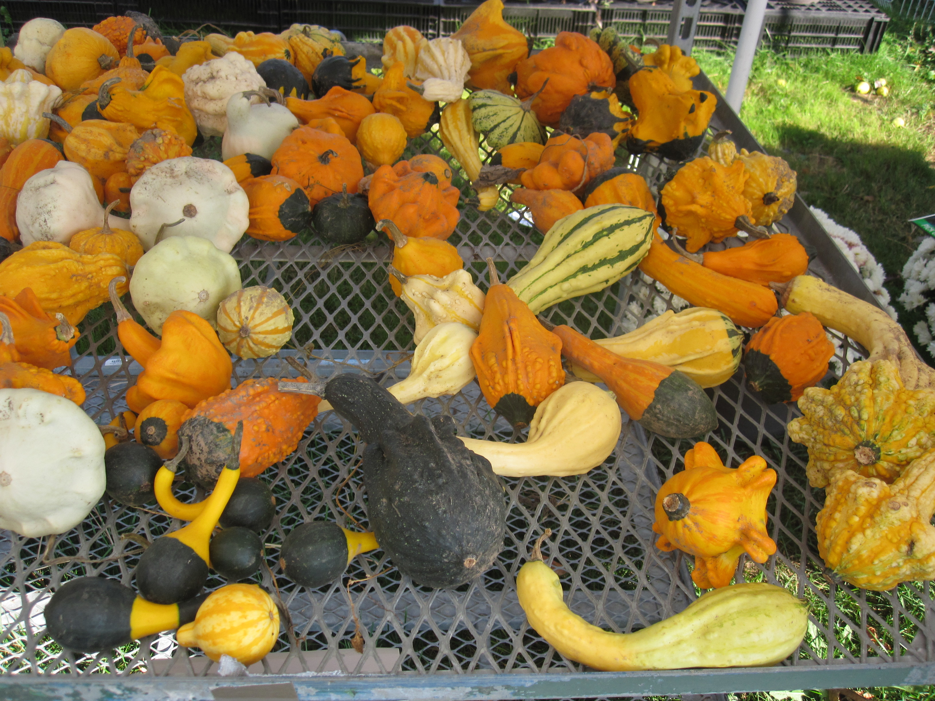 Oh my squash! – Welcome to the Urban Veggie Lab
